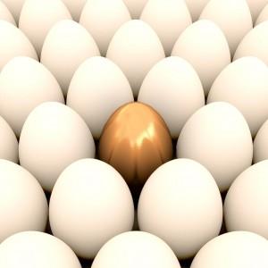 egg11 crop